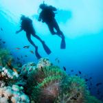 马提尼克岛潜水